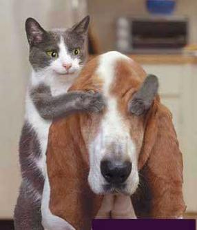 """Obrázek """"http://www.hosted-webs.com/jokes/pics/cat-dog.jpg"""" nelze zobrazit, protože obsahuje chyby."""